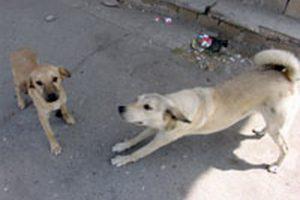 В Азербайджане планируют ужесточить ответственность за жестокое обращение с животными