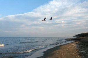 Каспий ожидает обмеление?