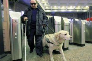 Собаки-поводыри в Азербайджане — большая роскошь