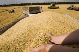 Азербайджан импортировал из России 223,000 тонн зерна