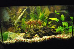 История возникновения аквариума