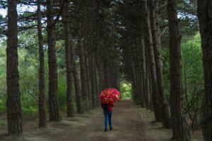 Наедине с природой: Ботанический сад в Баку (20 фото)