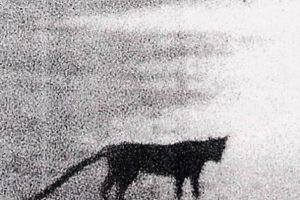 Таинственные хищники: Загадка Бодминского зверя