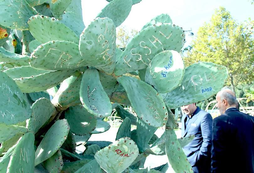 kaktus-baku-bulvar