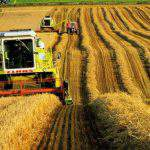 selxoz-agrar-neneft-sektor-selskoe-xozaystvo
