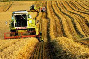 В Азербайджане предложили эффективное развитие аграрного сектора