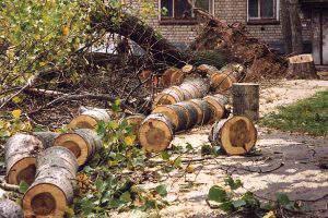 Бизнесмена в Баку оштрафовали на 57,000 манат за вырубку деревьев