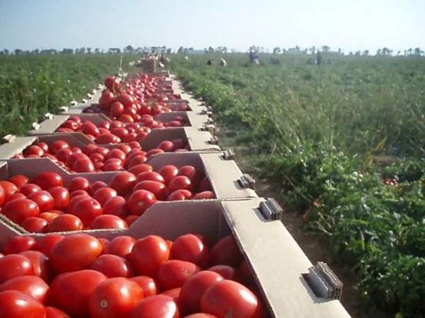 fermer-farm-selskoe-xozaystvo-agriculture-1