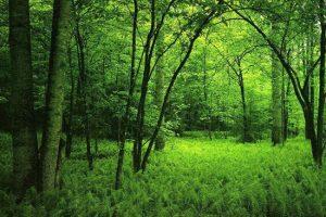 В Азербайджане проведут инвентаризацию лесов