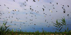 Аггельский национальный парк: Птичий рай или Обитель русалок