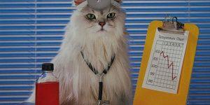 Кототерапия: лечебные способности кошек