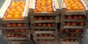 В Азербайджане появилась Ассоциация производителей и экспортеров хурмы